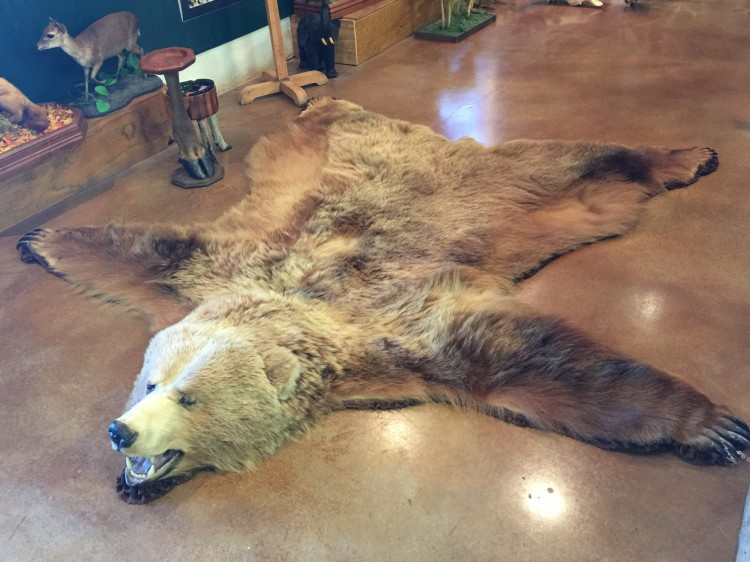Huge Alaskan Kodiak Brown Bear Rug Taxidermy Mount For Sale